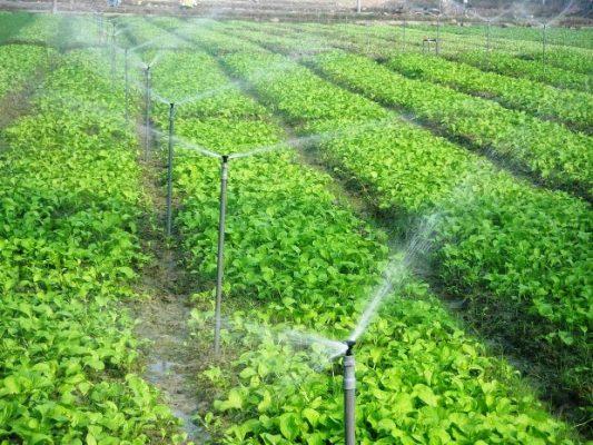 Lọc nước đầu nguồn cho trang trại